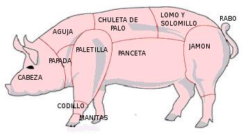 vida cerdo:
