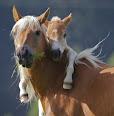 Lindas Imagens de Cavalos em Png