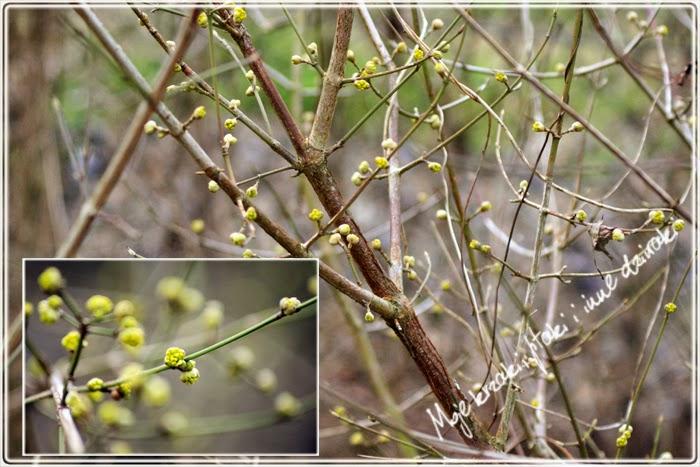 symptony wiosny
