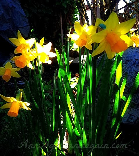 Checking On The Garden - Wordless Wednesday - Ann Again and again
