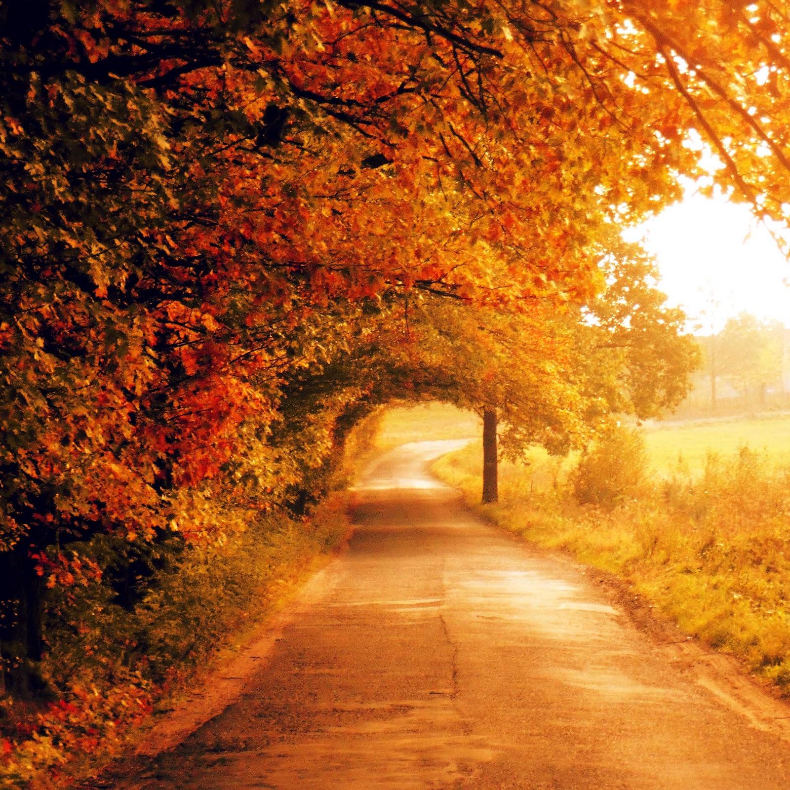 Fall Wallpaper Images Free: Free Full HD Wallpaper صور عالية الجودة : Autumn Full HD