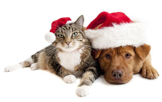 foto anjing kucing lucu
