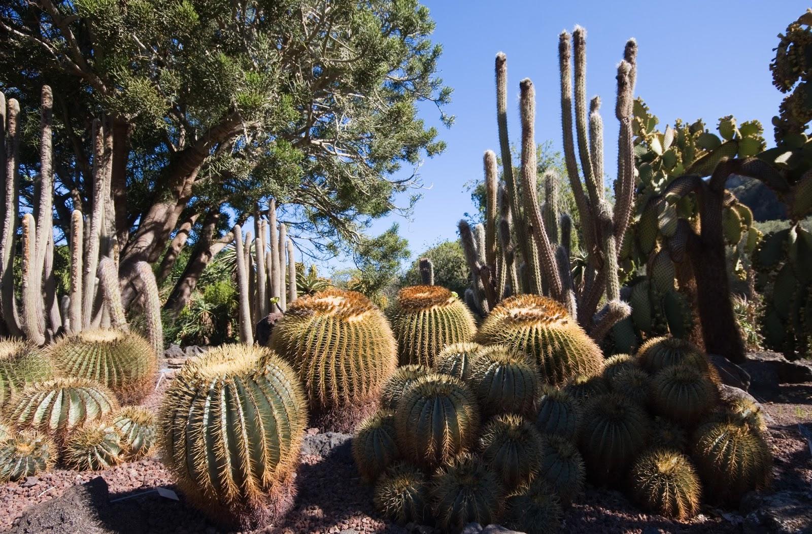Jard n bot nico viera y clavijo jard n canaria las - Jardin botanico las palmas ...
