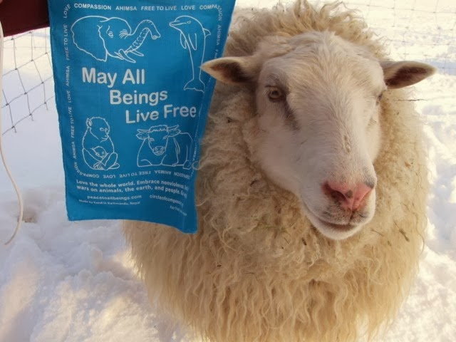Prayer Flags for Animals? Yes! Order Here: