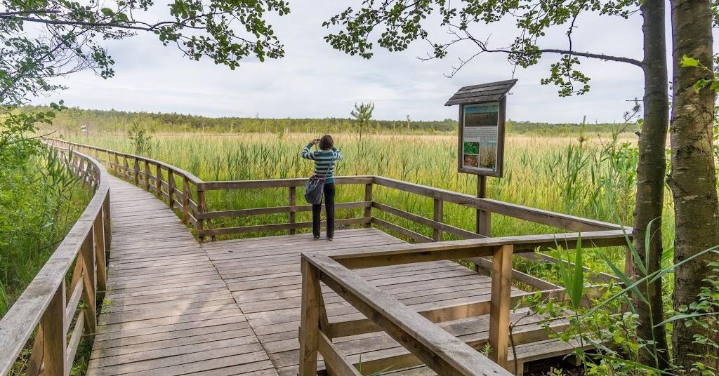Kładka nad Jezioro Moszne w Poleskim Parku Narodowym