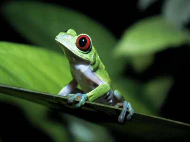 Pictures animals live tropical rainforest