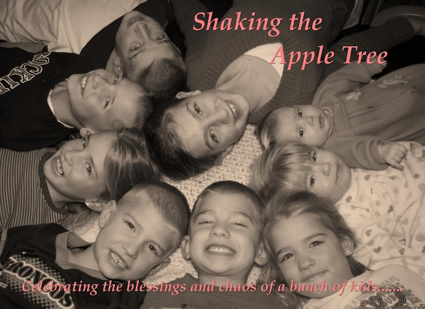 Shaking The Apple Tree