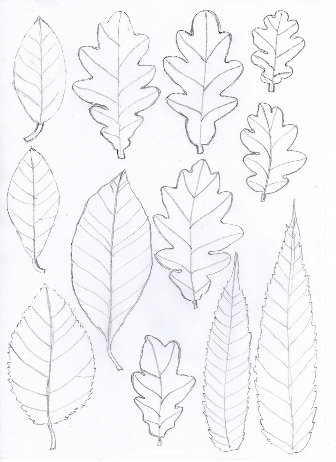 Invaluable image with printable leaf patterns