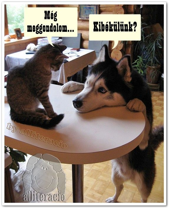 A macska magyarul online dating 2