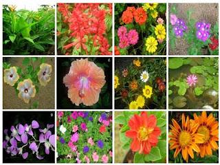 Uso de las plantas las plantas y su utilidad for Funcion de las plantas ornamentales