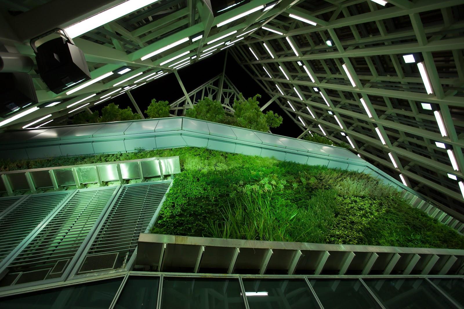 Mantenimiento de un jard n vertical isla verde jardines - Mantenimiento de un jardin ...