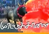 MurattuKaalai – Thandhi Tv Mattu Pongal Special Program Show 15-01-2014