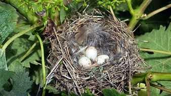 Los nidos en los sueños