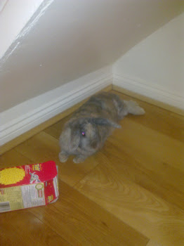 Bunny Pic of the Moment