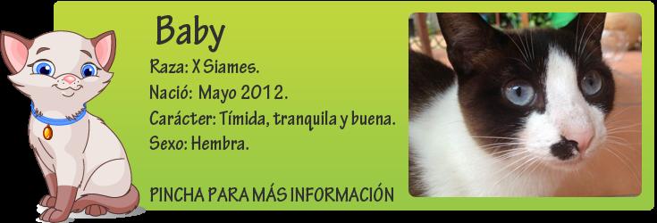 http://mirada-animal-toledo.blogspot.com.es/2012/08/baby-gatita-guapa-en-adopcion.html