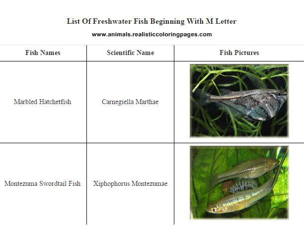 List of freshwater fish beginning with M