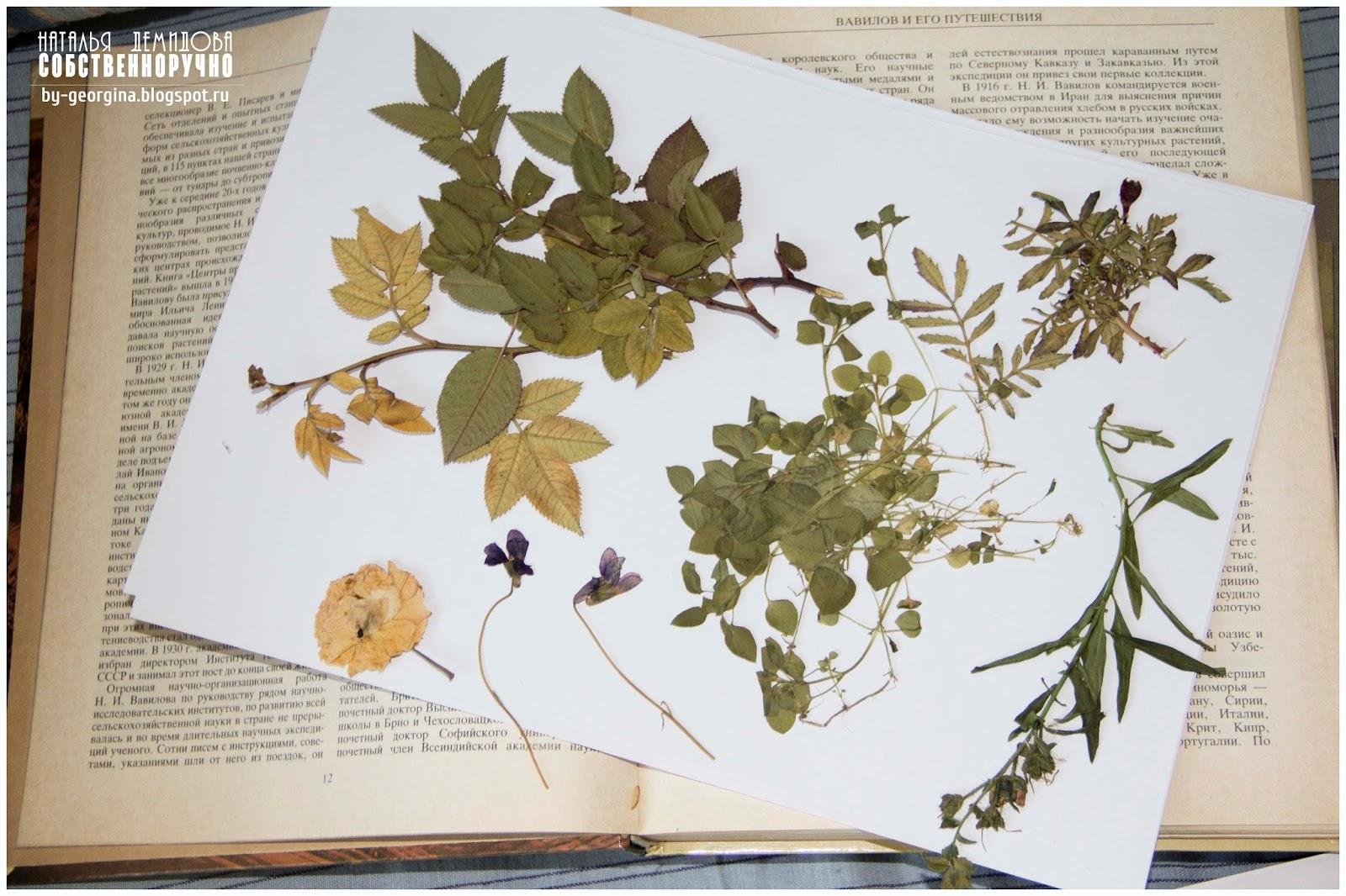 Как сделать гербарий своими руками? Гербарий 48
