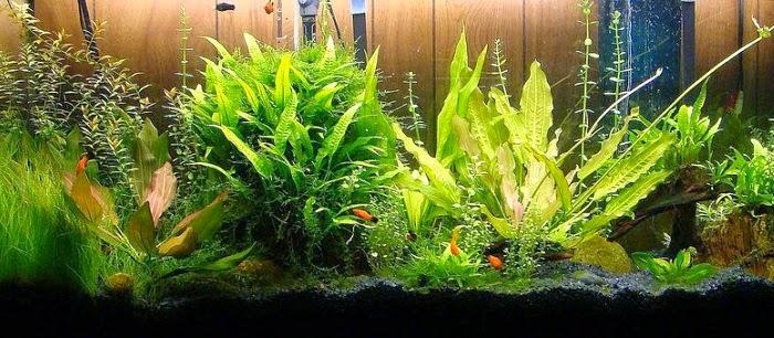L'essentiel sur l'éclairage des aquariums