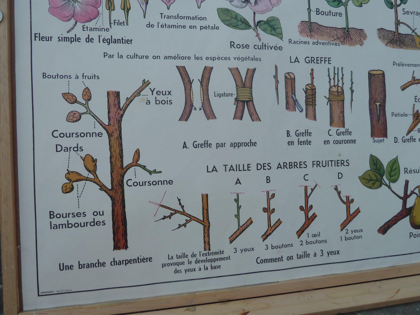 Ecole fmr 1000 affiches scolaires reproduction - Affiche multiplication ...