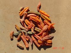Frutos do mamãozinho-de-veado