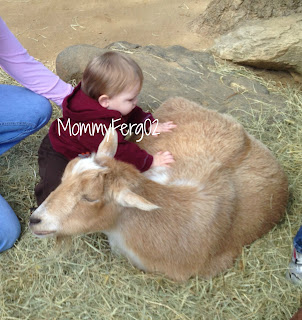 Petting the big goat! He loved it!