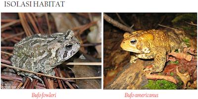 Habitat Katak dan Kodok Mekanisme Evolusi Makhluk Hidup