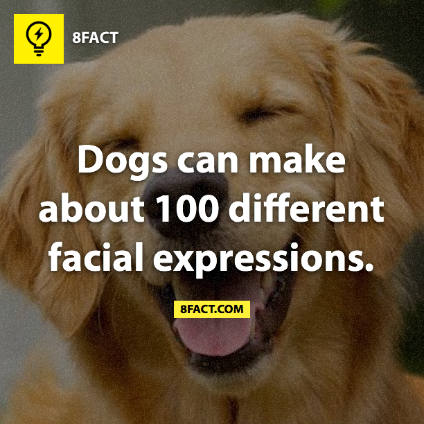 Dogs can make about 100 different facial expressions