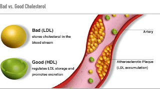 What-is-Good-Cholesterol-&-Bad-Cholesterol