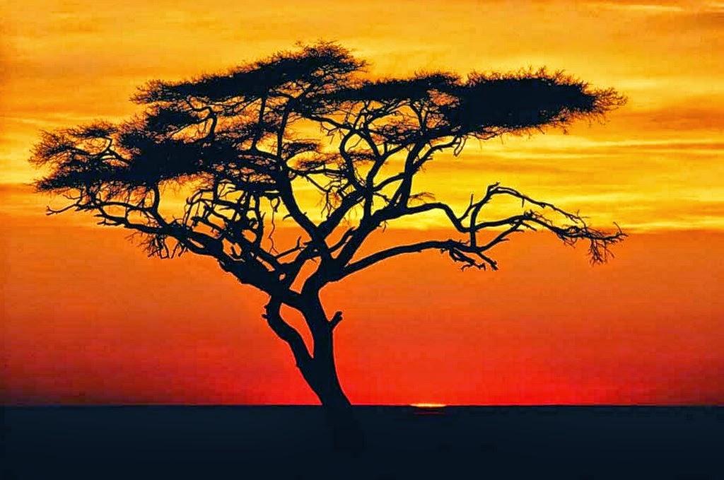 paisajes-naturales-para-pintar