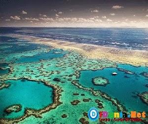 Terumbu karang terindah didunia