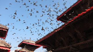 templo-hindú-palomas