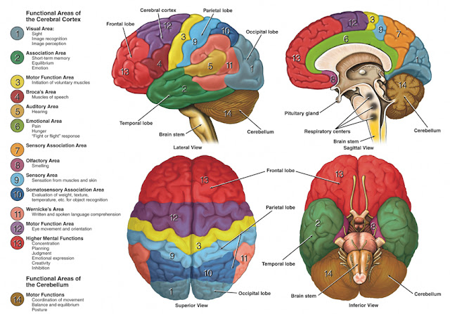 Brain Function Chart6