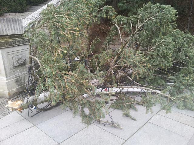 Счупено Дърво в Габрово