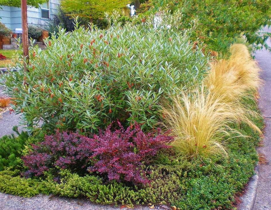 Urban Landscape, Native Landscape: Sidewalk Garden on SW Juneau Street