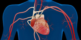 Exercícios Físicos na saúde Cardiovascular