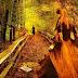 Az út amin jársz egy választás...