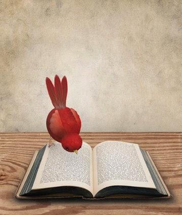 http://bibliolectors.tumblr.com/page/8