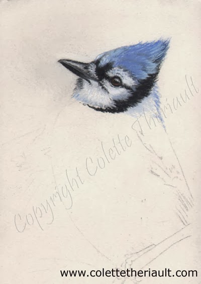 blue jay painting in progress by Wildlife Artist Colette Theriault