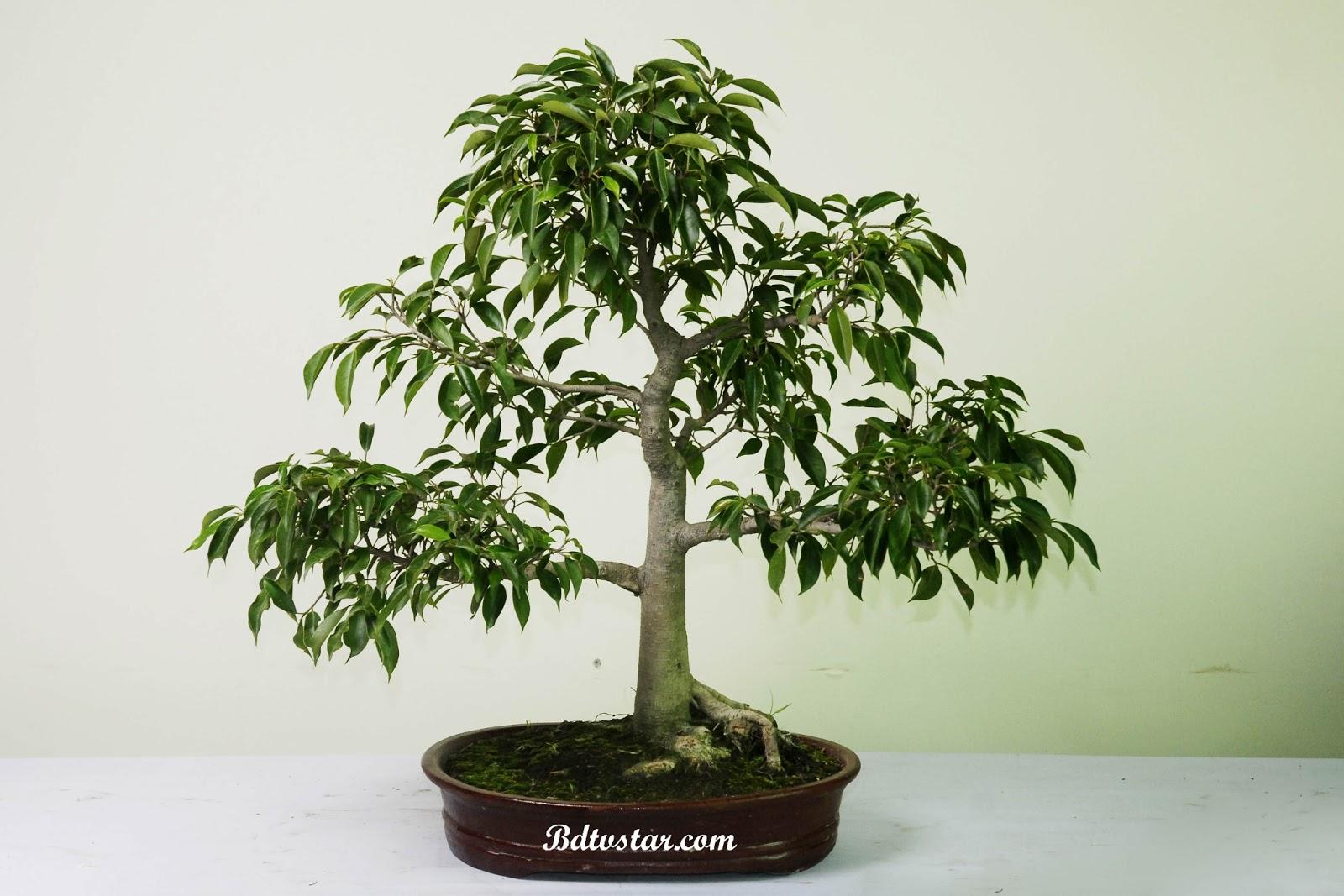 bonsai wallpaper 03 ndash - photo #37