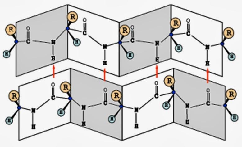 Proteínas. Estructuras | Apuntes de Biología Molecular