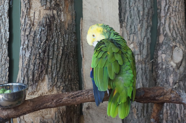 niagara falls bird kingdom