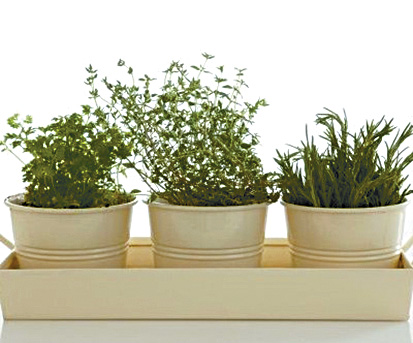 Cultiv tu minihuerto de hierbas arom ticas aprende a - Cultivo de hierbas aromaticas en casa ...