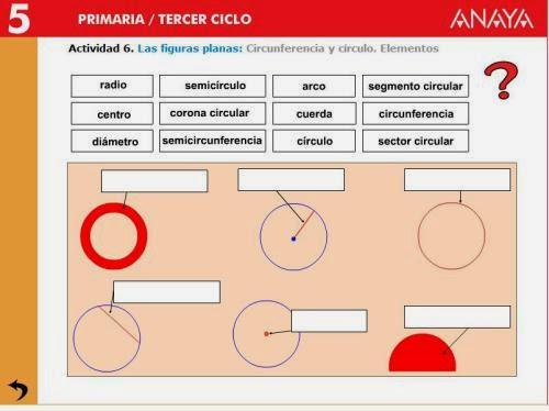 Partes del círculo y de la circunferencia.