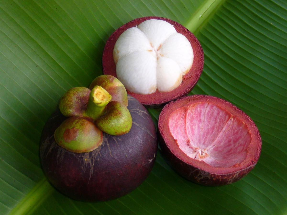est gio no s tio dos herdeiros frutas raras ainda s o pouco exploradas rh estagiositiodosherdeiros blogspot com frutas importadas a colombia frutas importadas pelo brasil