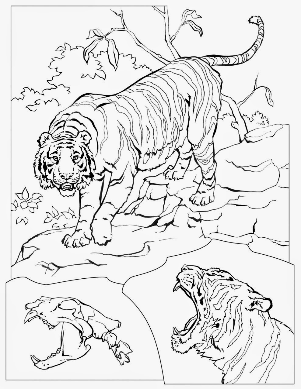 National Geographic Coloring Pages. Grey Seal. National Geographic ...