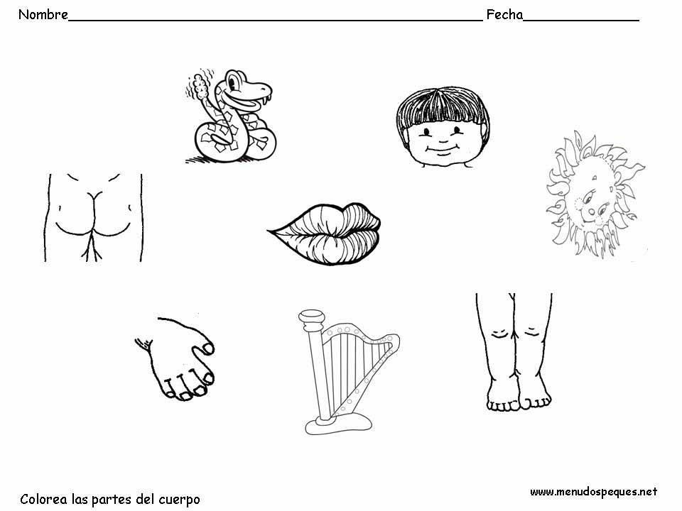Las partes del cuerpo (especial para niños).: Vamos a colorear.