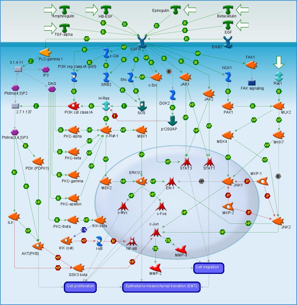 Mapa de señalización celular