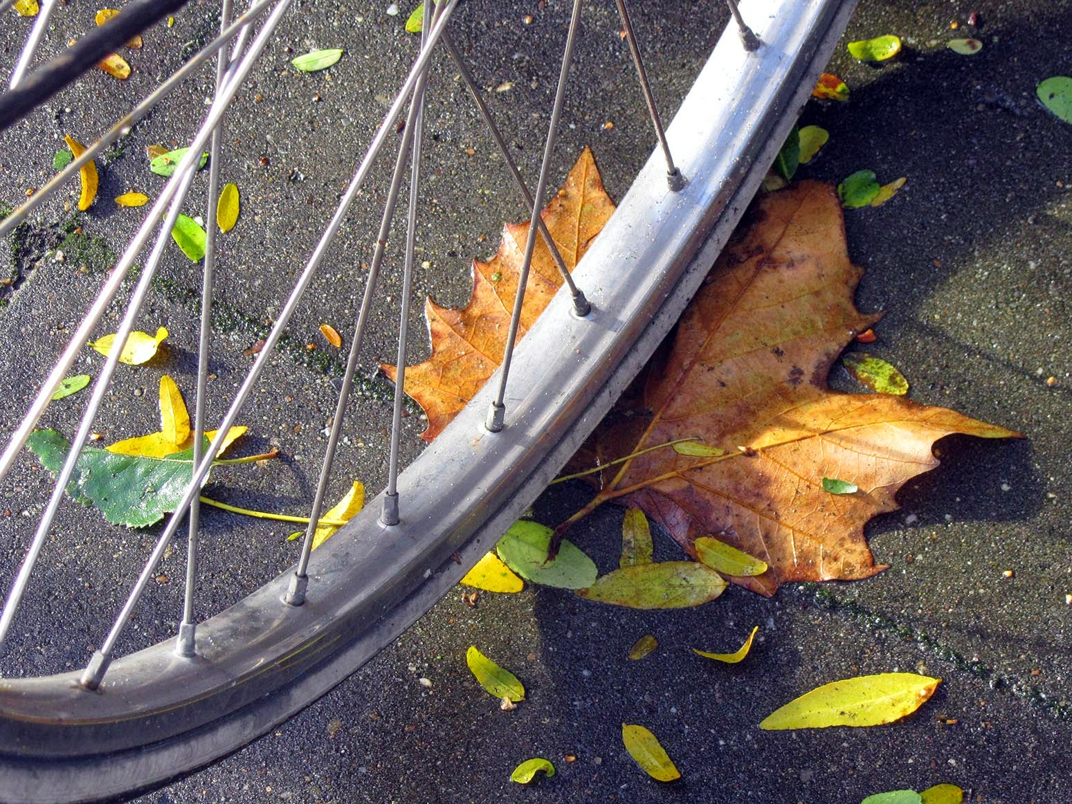 leaf under bike wheel
