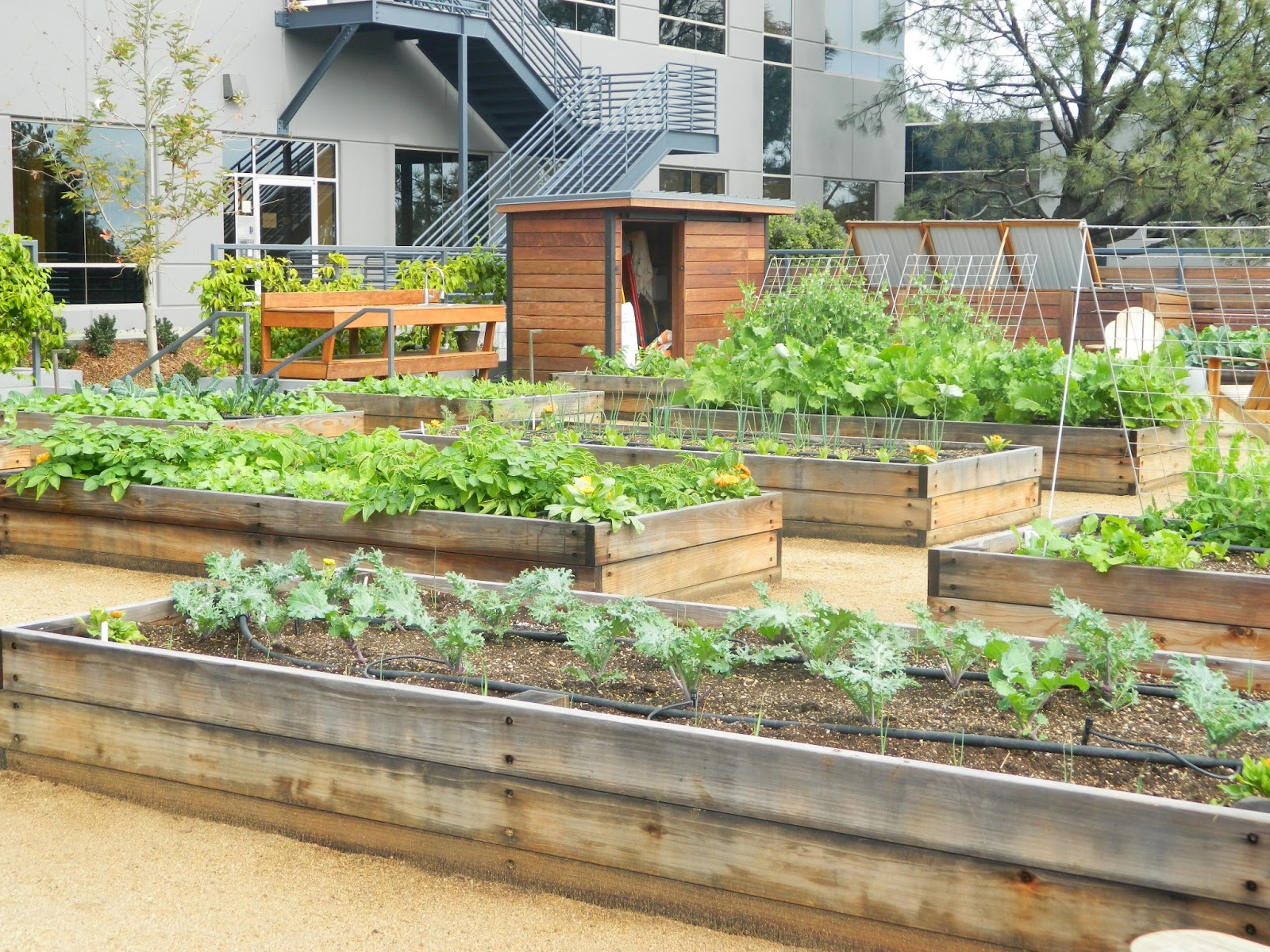 Corporate Edible Garden Works For Employees