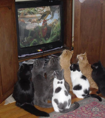 A bunch of cats staring at a bird that is on TV. Never forget to feed the cats.